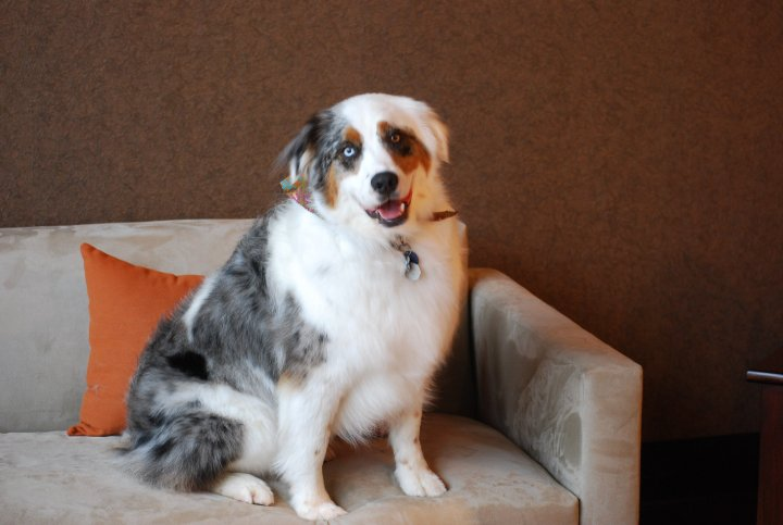 St Louis Dog Grooming